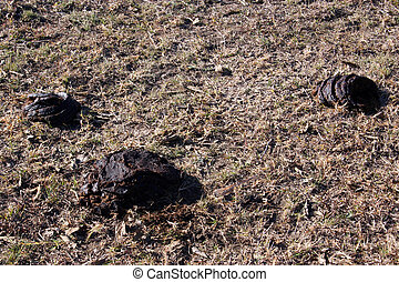 Cow Droppings - Some cow droppings in an open field.