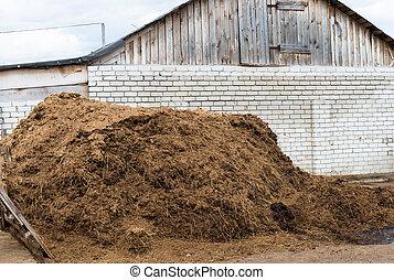 Cow dung as a natural fertilizer