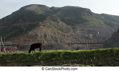 Cow Eating Grass and Passing Train - Steady, wide shot of a...