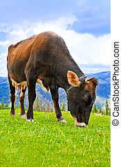 Cow eating grass on meadow at mountains landscape