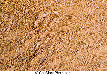 Cow fur (skin) texture.