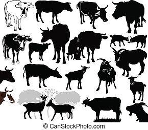 Cow goat animals calf