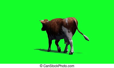 cow goes fast - view from behind - green screen - you can...