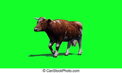 cow goes fast - view from sideways - green screen - you can...