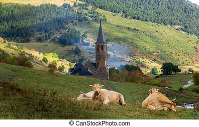 Cow grazing in high mountain meadows. Montgarri Sanctuary -...