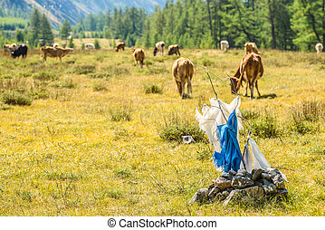 cow grazing in mountain
