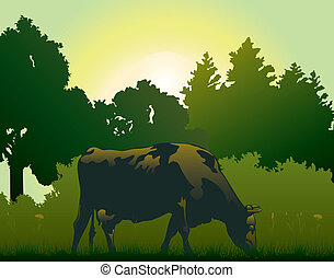 cow grazing in the morning - rural landscape with grazing ...