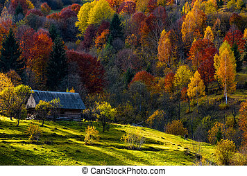 abandoned wooden house in autumn forest - cow grazing on a...