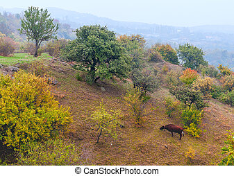 Cow grazing on slopes of the mountain