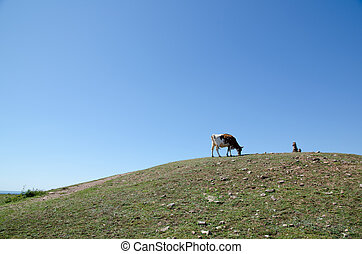 Cow grazing on top of the hill