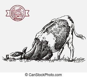 cow., gris, ilustración, ganado, husbandry., crianza, animal