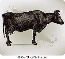 Cow, hand-drawing. Vector illustration.