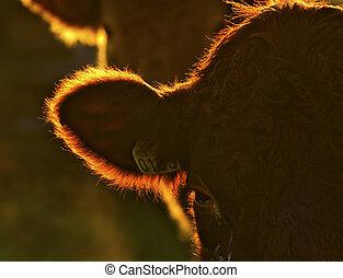 cow - Head of an ox.