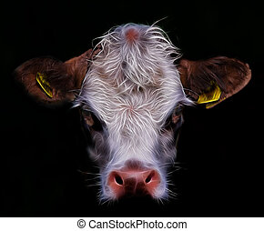 Cow Head -  An isolated cows head with dark background