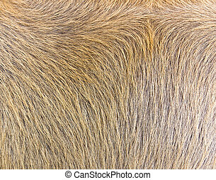 close-up of cow-hide texture