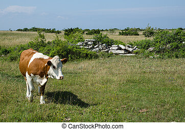 Cow in a green pastureland
