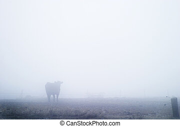 Cow in Fog