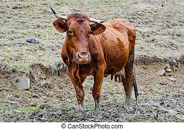 cow in front of spring mountain landscape