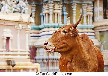 Cow in front of temple