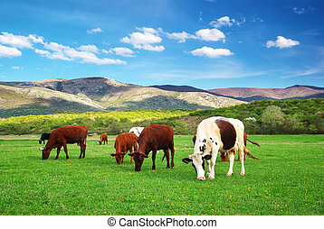 Cow in green meadow. Nature composition.