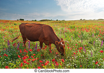 Cow in meadow.
