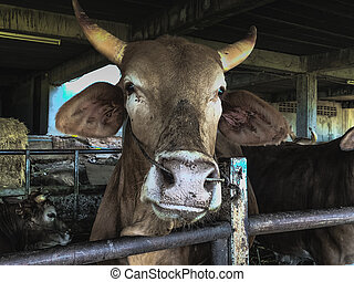 Cow is on a farm in the countryside.