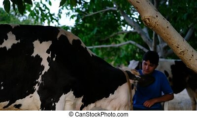 Cow-loving young man