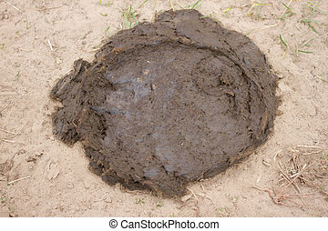 Cow manure lying on the ground. Natural animal dung, fertilizer