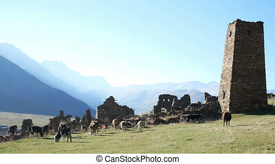 Cow mountains village sun - Alpine cow amazing covered with...