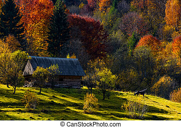 cow near woodshed in autumn forest - cow grazing near...