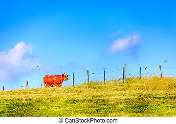 Cow on a farm