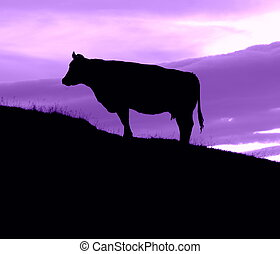 Cow On A Hill With A Purple Sky - Silhouette Of A Cow On A...