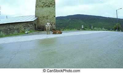 Cow on city street