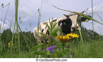 cow on grass field and flies