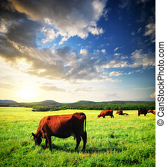 Cow on meadow - Cow on green meadow. Nature composition.