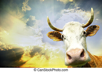cow on sky - Silly smiling cow on sky background