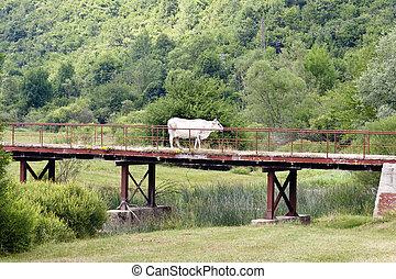 Cow on the bridge