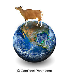 cow on the earth . Elements of this image furnished by NASA