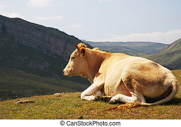 Cow on top of the hill in summer
