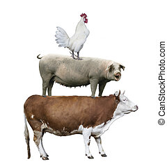 Cow, pig, rooster stand on each other
