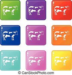 Cow set 9
