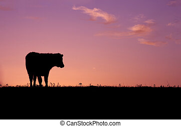 Cow silhouette in a field during sunrise