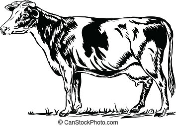 Cow - The black silhouette of a cow on white,line art ready...