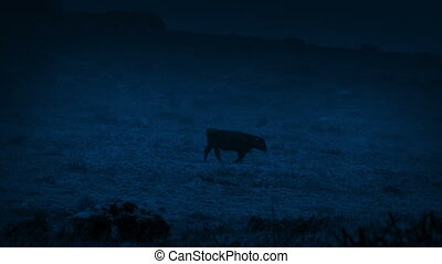 Cow Walks Through Stormy Landscape In The Dark