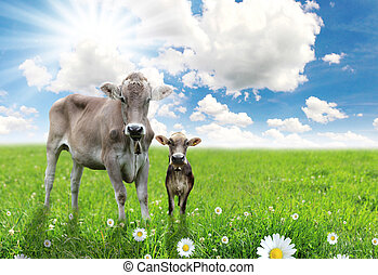 Cow with a calf on a beautiful meadow