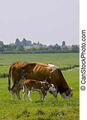 Cow with calve - Brown cow with little calve