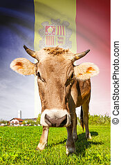 Cow with flag on background series - Andorra