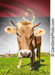 Cow with flag on background series - Angola