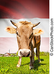 Cow with flag on background series - Austria