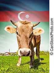 Cow with flag on background series - Azerbaijan